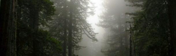redwoodpano