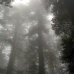 Redwood NP Damnation Creek Trail