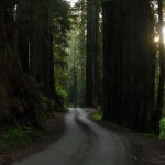 Redwood NP Howland Hills Road