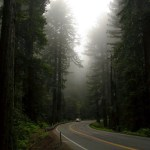 Redwood NP Highway 101