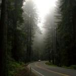 Redwood NP Highway 101