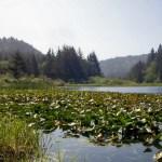 Redwood NP Lagoon Creek