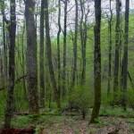 Shenandoah NP forest