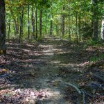 Natchez Trace old trace
