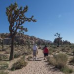 Joshua Tree Tall Tree