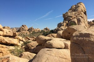 Joshua Tree Hidden Valley