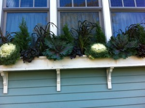 Newton window box designer, Fleuri Designs, Newton