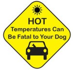 hot temperatures and dogs in cars
