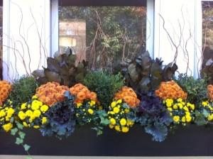 Fleuri Designs Zoe Forbes Newton ILoveNewtonMA I Love Newton best flower boxes designer flower box container garden