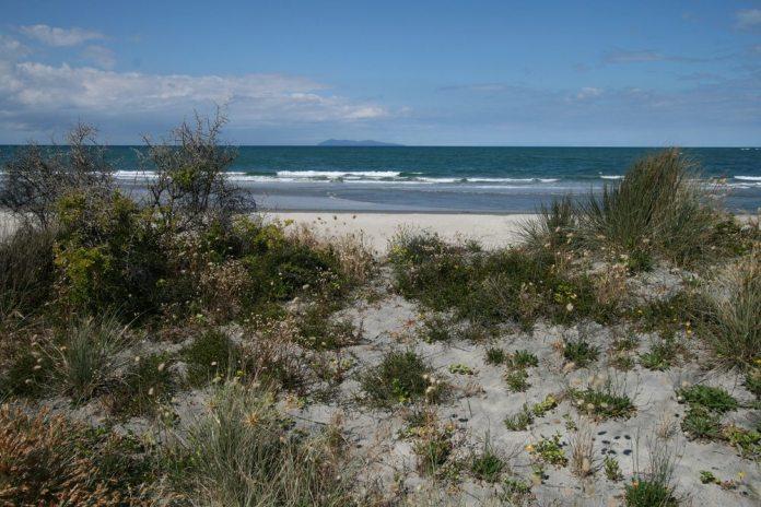 waihi-beach-bay-of-plenty