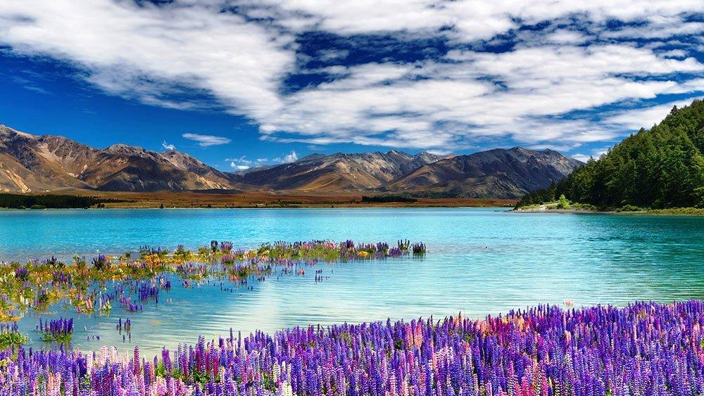 LakeTekapo  I Love New Zealand