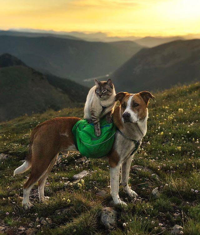 henrythecoloradodog