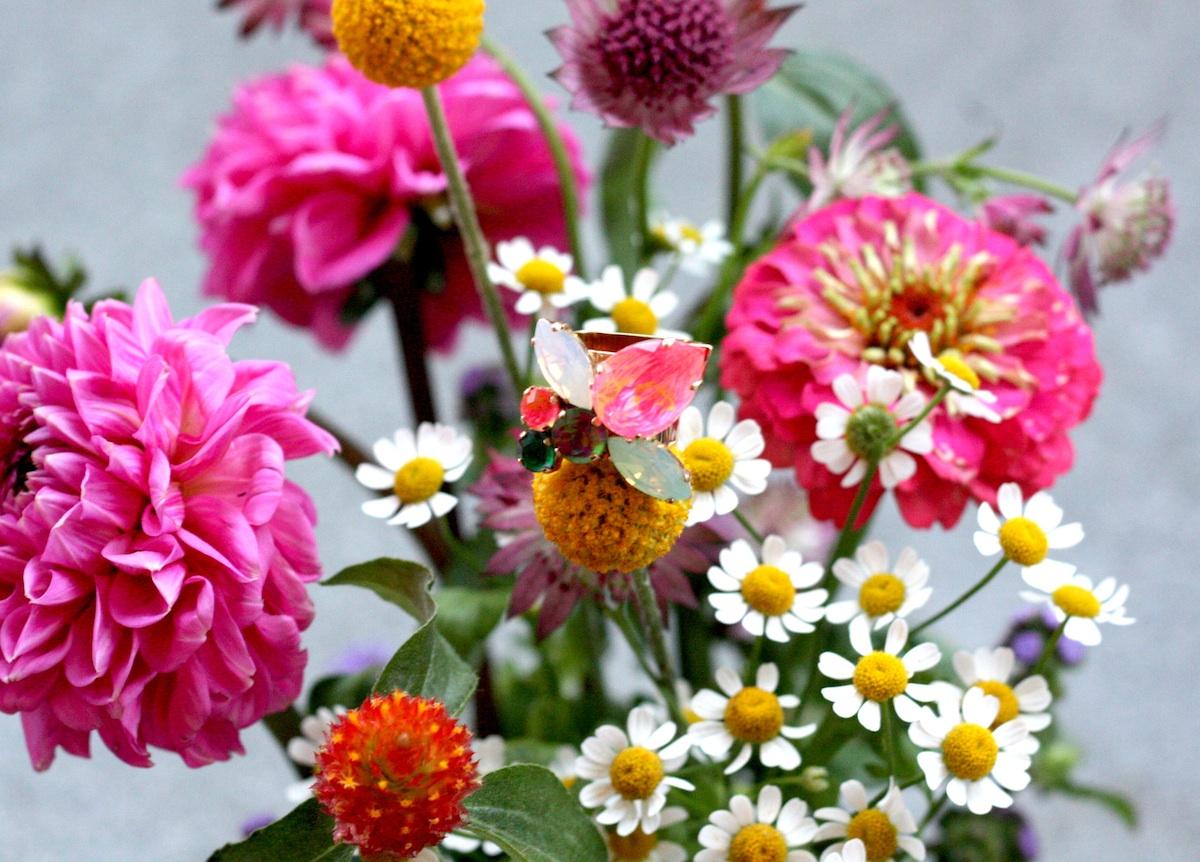 Blumen Im August bretagne bilder blumen im august bunte
