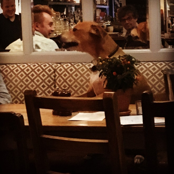 A DOG ENJOYING THE PUB QUIZ AT THE QUEENS