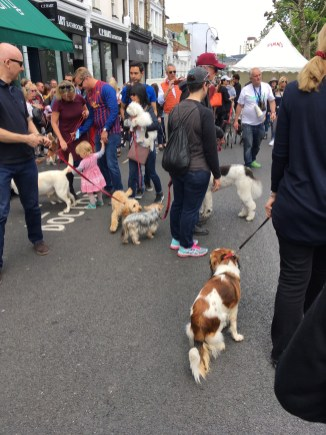 ASSEMBLING FOR THE DOG SHOW