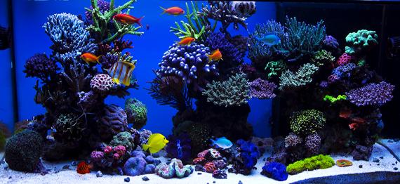 500l reef tank