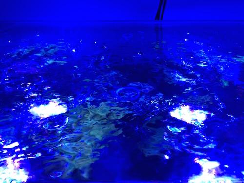 Abdeckung Meerwasser Aquarium