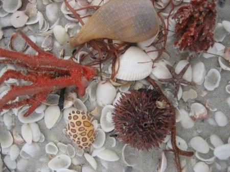 Crab shell, Purple Urchin, Fig and Sponge