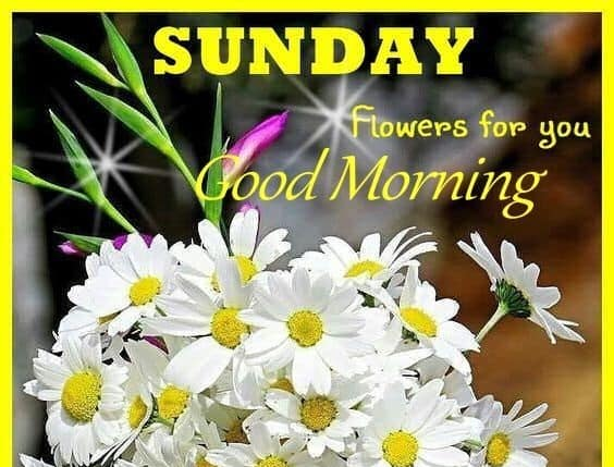 Good Morning Pics Sunday