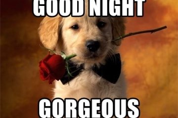 Good Night Gorgeous Romantic Good Night Meme