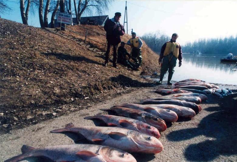 20 éve történt a tiszai ciánszennyezés