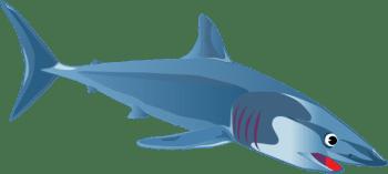 shark-love2beselling