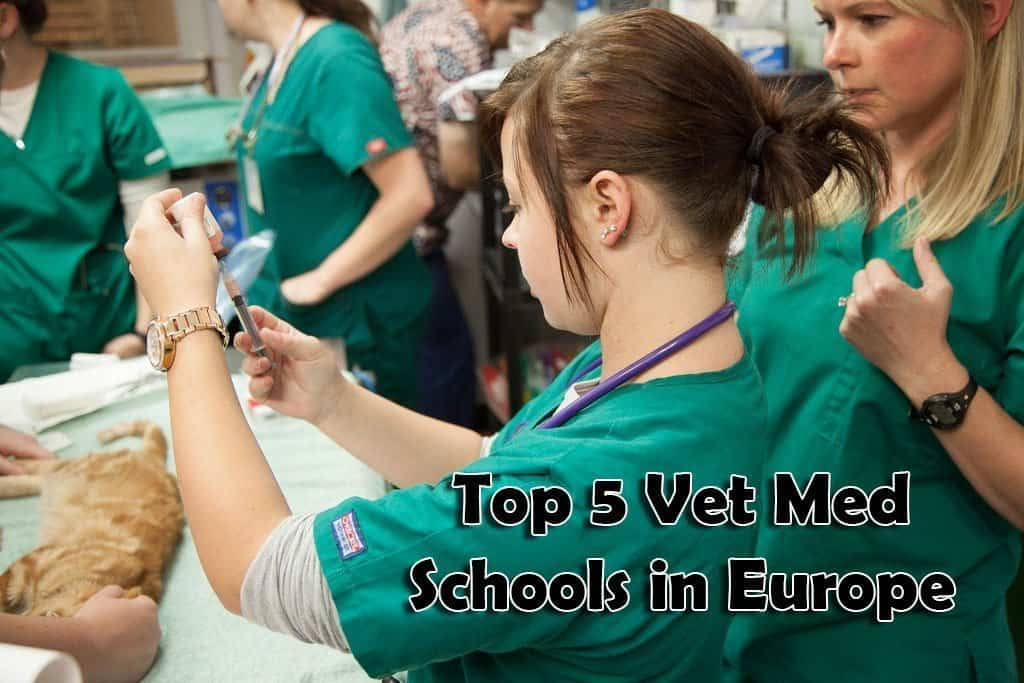 Vet students learning