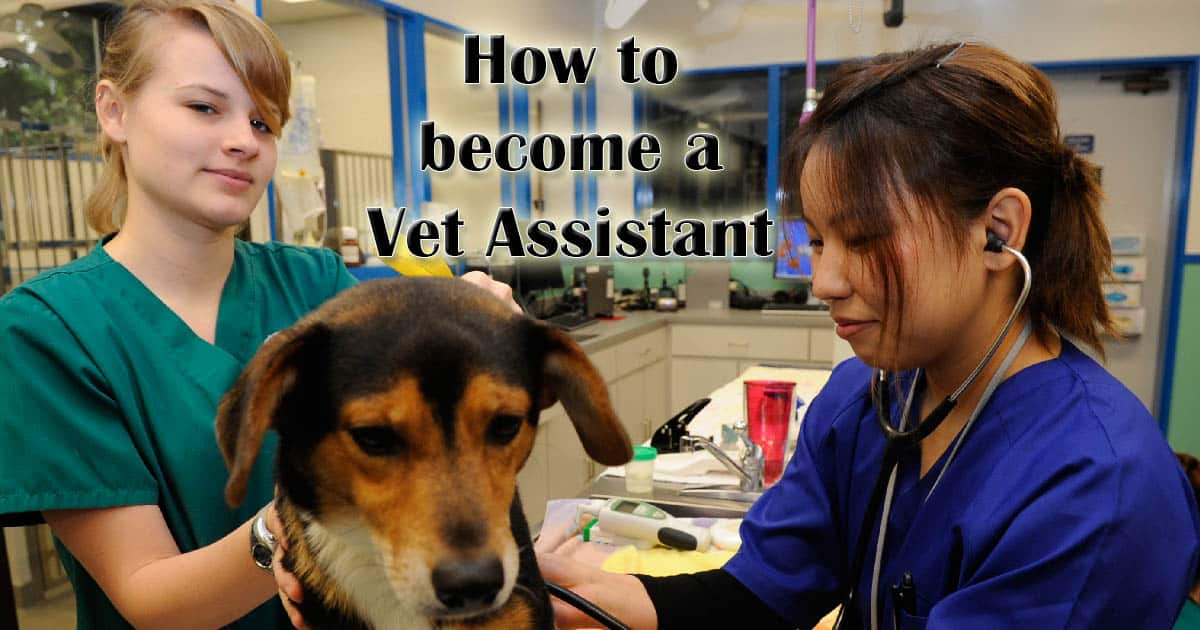 How To Become A Veterinary Assistant I Love Veterinary