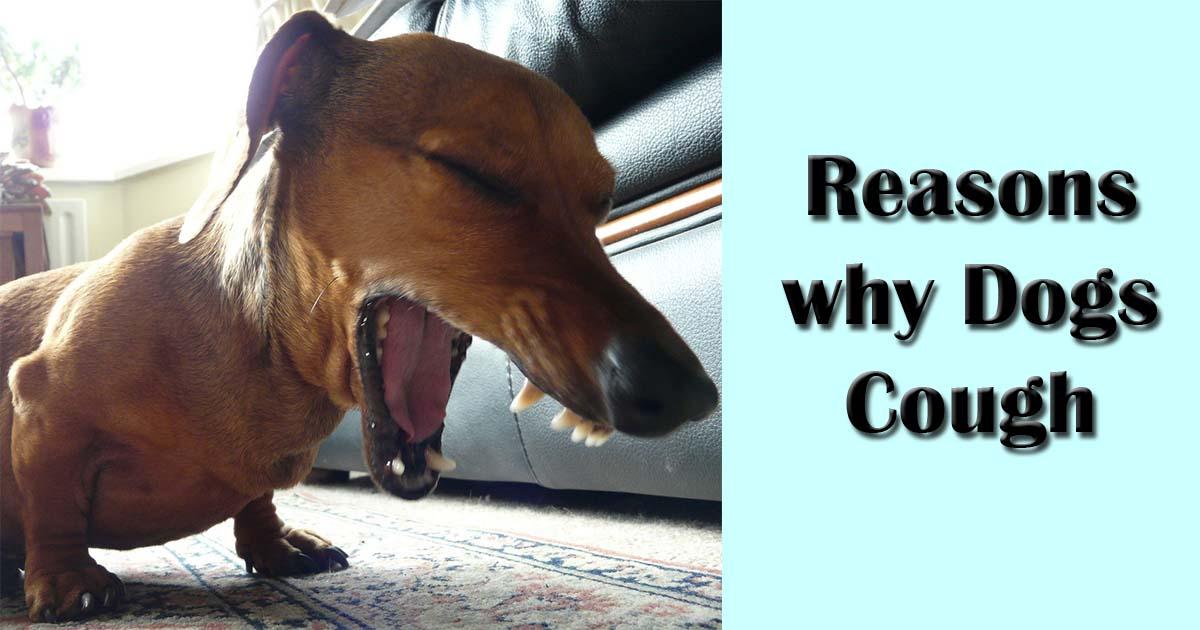 Dog Making Wheezing Sounds