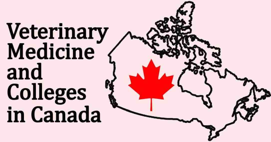 canada map outline, maple leaf