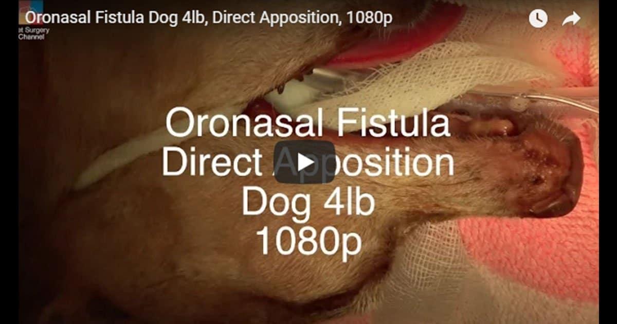 veterinary surgery video i love veterinary