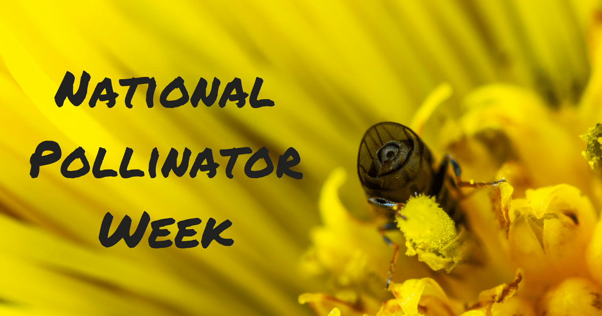 pollinator bee cover image