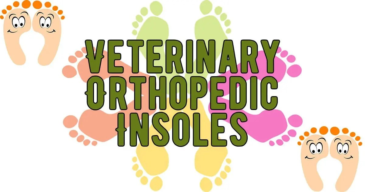feet, veterinary insoles, vet shoes, sneakers
