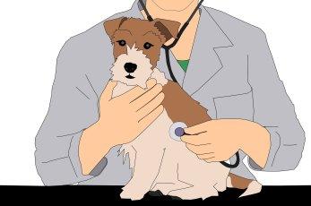Veterinary Nurse Initiative, veterinary technician, dog, examination