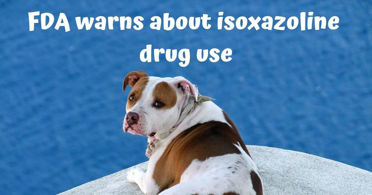 dog, pit bull, FDA warns about isoxazoline drug use
