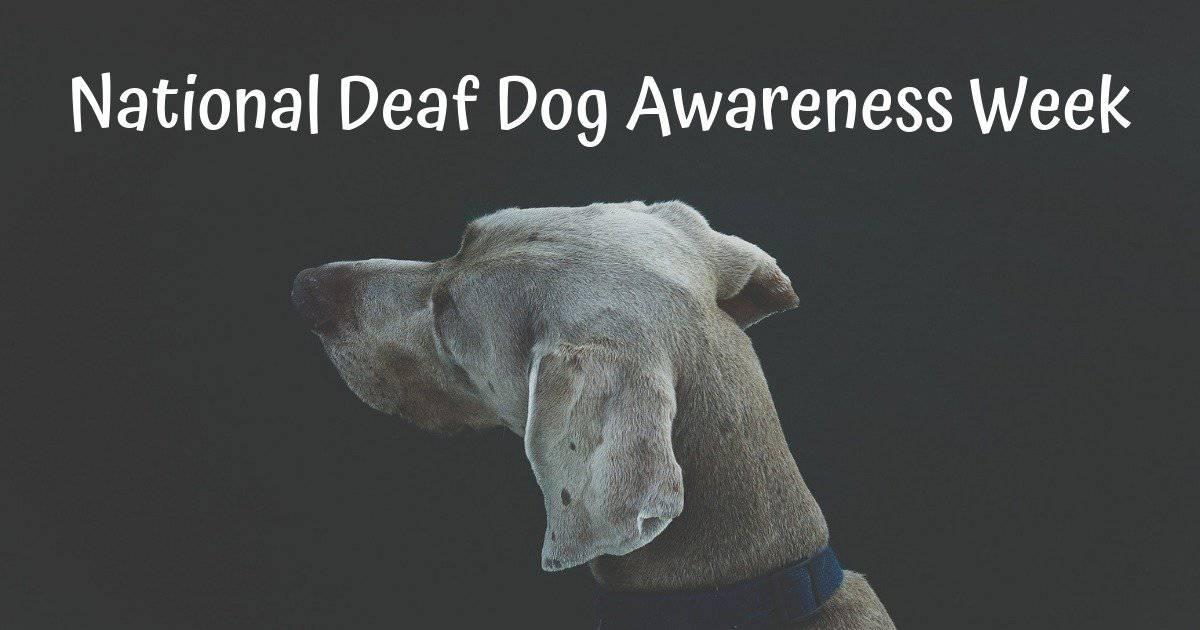 National Deaf Dog Awareness Week