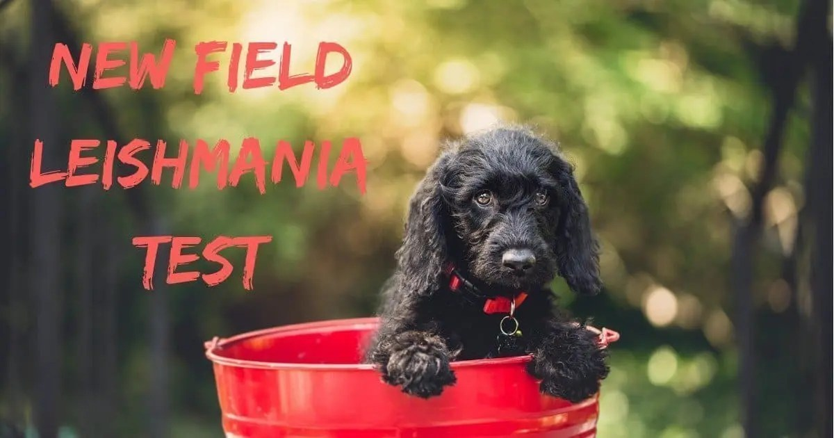 dog in a red bucket, New Field Leishmania Test