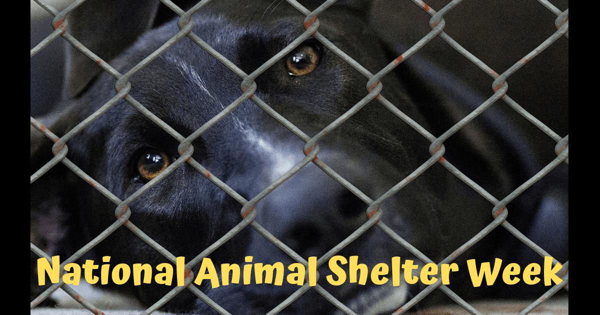 National Animal Shelter Week