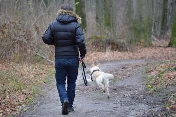 walk your dog
