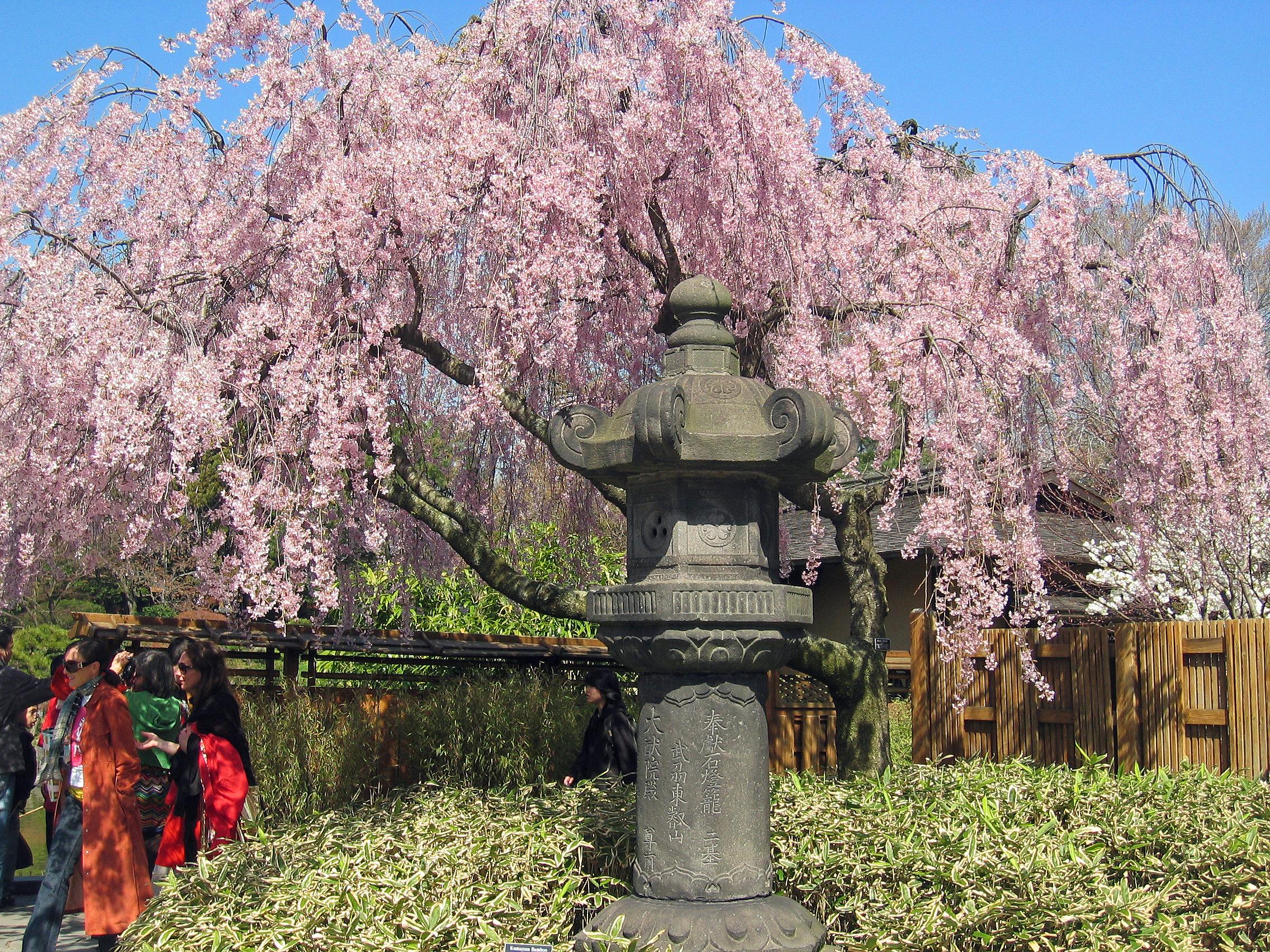 HanamiBuona Pasqua  Il padiglione doro