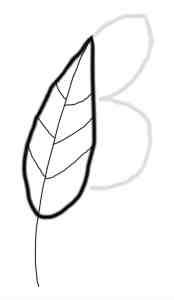 Primo disegno