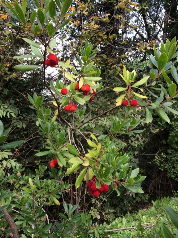 Flowering bushes at Poggio Verde