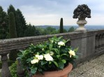 Gardenias on the terrace of the master bedroom