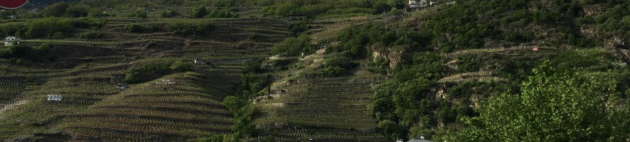 Vineyards in Valtellina