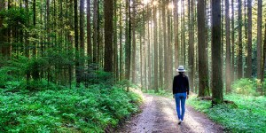 Person walking through forest