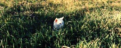 biancocat