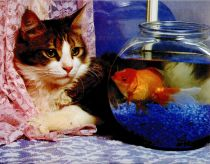 cats-03-House_Cat-and-Goldfish