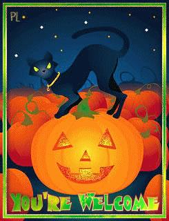 Pumpkin_Patch_YW_gif