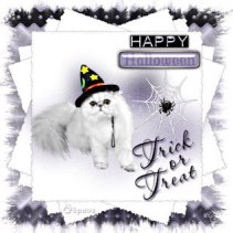 Trick_or_Treat_Witchy_Web~6paws_jpg