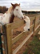 cat_horse_kiss_love3